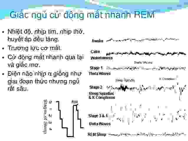 Chu kỳ REM 1
