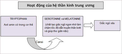 3.Chất canxi 1